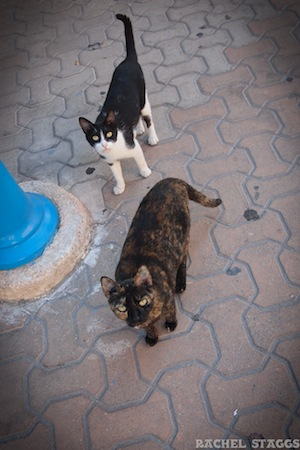 hidalgo avenue cats on isla mujeres caribbean
