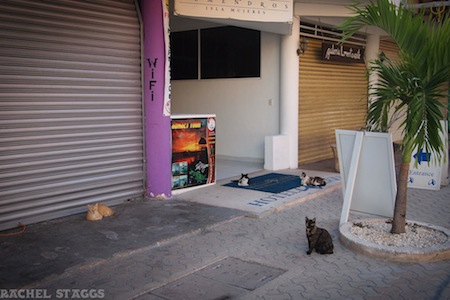 cats in the yucatan, cats lounging on isla mujeres, mexico