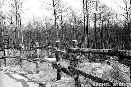 bastrop state park trees fence